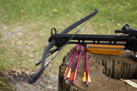 Crossbow arrows on the stump. Photo by VIPDesignUSA photo