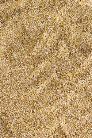 sand grains: The surface of the coarse sand as a background.