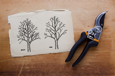 Tree pruning before and after. Vector illustration.