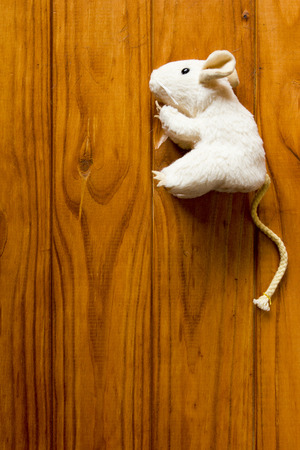 Toy for cat - white mouse on a wooden floor.
