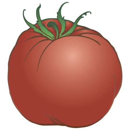 Ripe tomato classic - an agricultural product. Vector illustration.