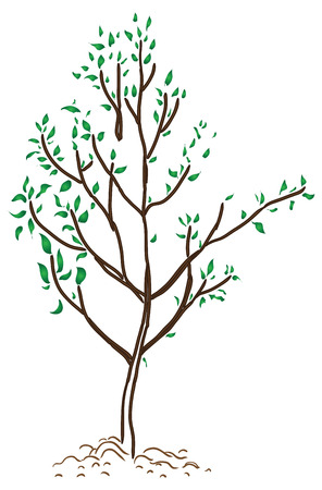young tree: Young tree in spring with new leaves. Vector illustration. Illustration