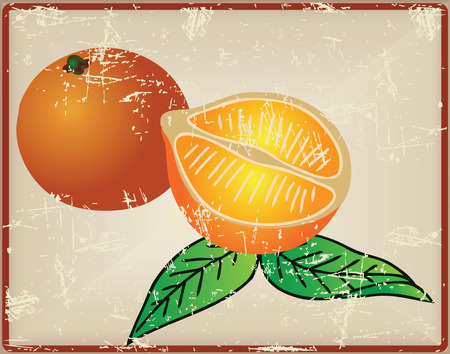 Citrus fruit - oranges, cut in half, on the old card. Vector illustration.