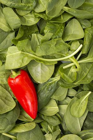 culinair: Rode paprika's op groene bladeren van spinazie. Culinaire achtergrond.
