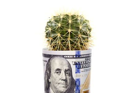 dolar: Cactus que crece de billetes de dólar doblado. Foto de archivo