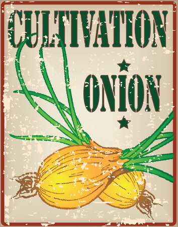 cultivation: Onion cultivation, vintage card for farming. Illustration