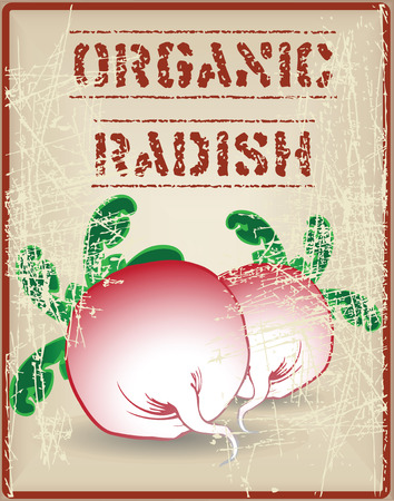 vectro: Radishes with green tops Organic. Vector illustration.
