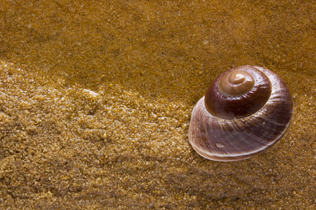 waters  edge: Sea shell on the sea sand at the waters edge. Stock Photo