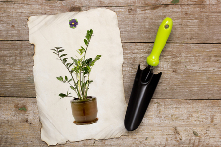 horticulture: Shovel for horticulture and image houseplant on a wooden background Stock Photo