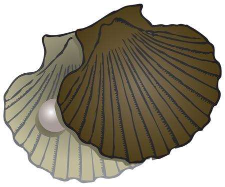 オープン サッシ真珠と貝。