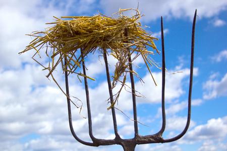 pitchfork: Iron livestock pitchfork against the sky outdoors