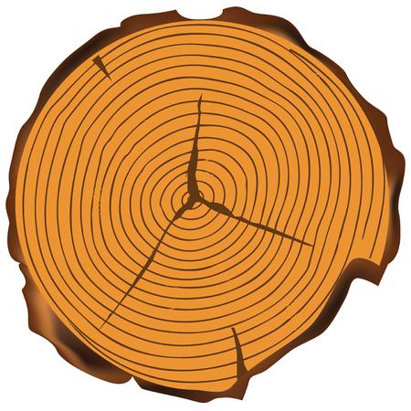 Jahresringe an einem Baumschnitt mit Rindenstellen Vektorgrafik