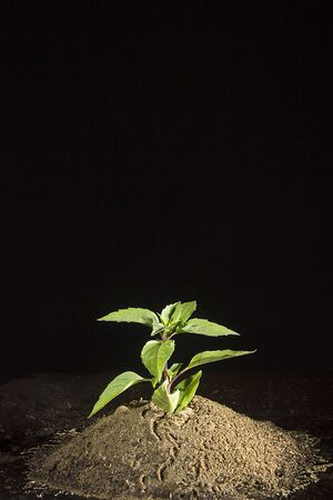 Green plant in the ground on a black background Reklamní fotografie