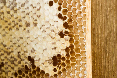 Wooden frame with honeycomb full of honey.
