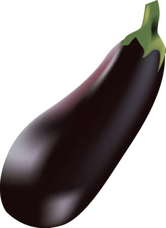 Ripe large eggplant for cooking. Vector illustration.
