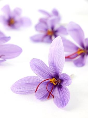 safran: Saffron flowers