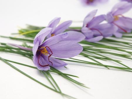saffron: Saffron flowers