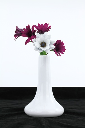 White vase with daisy flowers photo