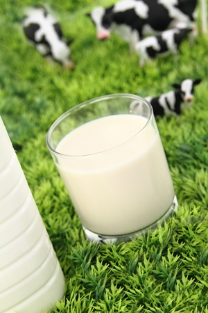 dairy cattle: Glass of milk with a farm on background
