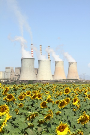 Sunflowers field and power plant Stock Photo - 10144172