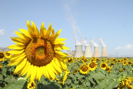 Sunflowers field and power plant Stock Photo - 10144177