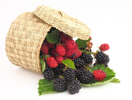 Raspberries and Blackberries fall out from the basket Stock Photo - 10144187