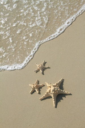Starfish on the beach at summer photo