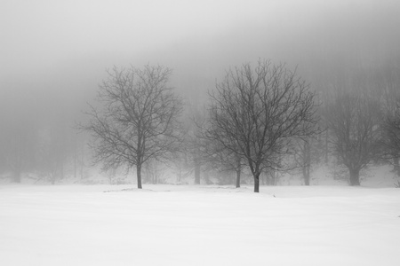 frozen trees:  Winter landscape Stock Photo