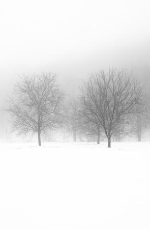 snow field:  Winter landscape Stock Photo