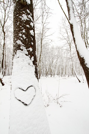 Heart shape on a snow covered tree photo
