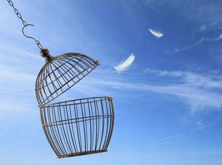 bird cage: Freedom concept. Escaping from the cage