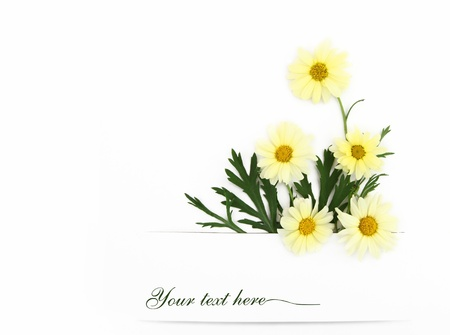 Daisy flowers banner Stock Photo - 13733480