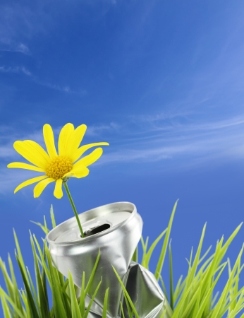 Aluminum can with growing daisy flower on the green grass  photo