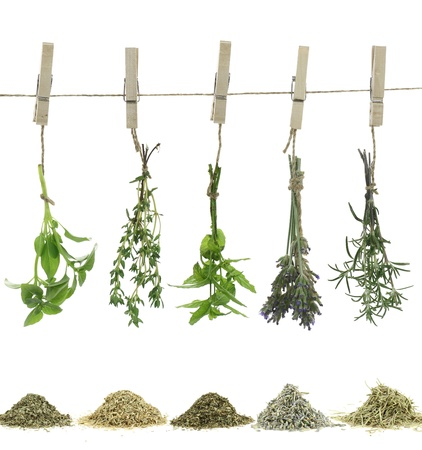 dried herbs: Fresh herbs hanging on a rope