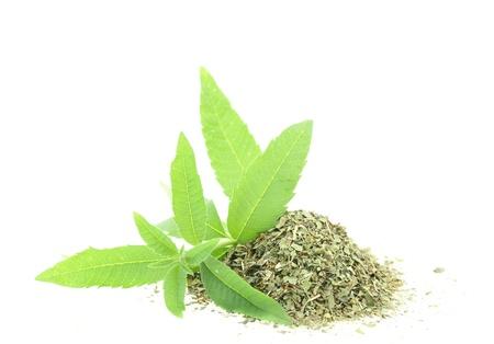 dried herb: Fresh and dry verbena Stock Photo