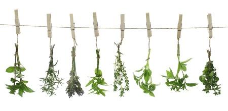 erbe aromatiche: Erbe fresche appesi a una corda