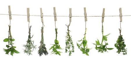 Fresh herbs hanging on a rope photo