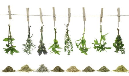 dried spice: Fresh herbs hanging on a rope