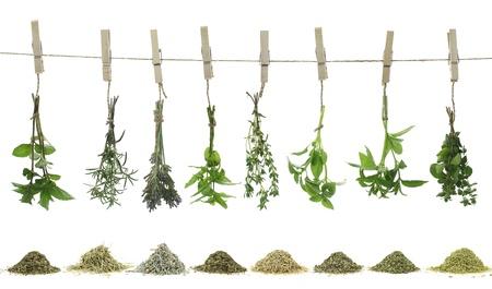 tomillo: Las hierbas frescas que cuelgan de una cuerda