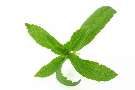 sweetener: Stevia Rebaudiana plant isolated on white background