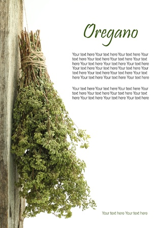 oregano plant: Dried oregano hanging from a rope with copy space