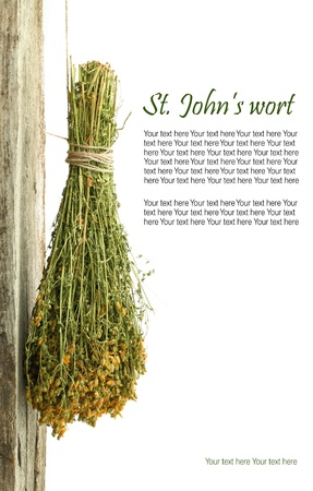 agriculture india: Dried St. Johns wort plant hanging from a rope with copy space
