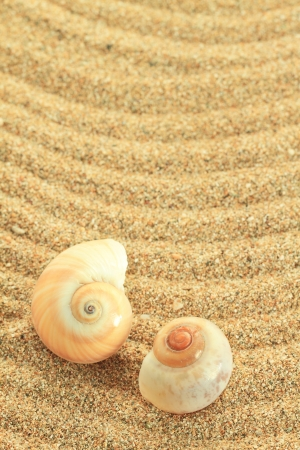 Gastropod shell on the sand photo