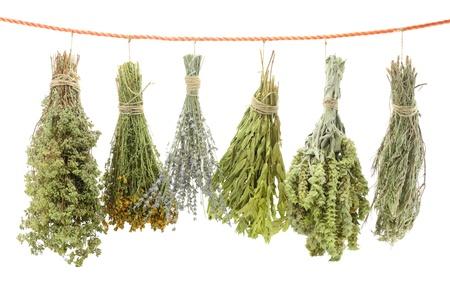 flores secas: Variedad de hierbas secas que cuelgan en una cuerda Foto de archivo