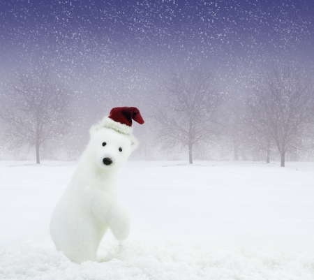 White bear with Santa Claus hat in snowy field photo