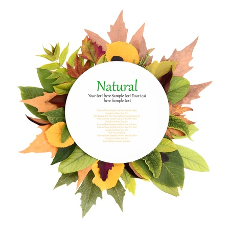 recipe card: White plate with colorful leaves around it