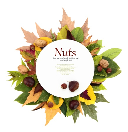 nut trees: White plate with leaves and nuts around it  Stock Photo