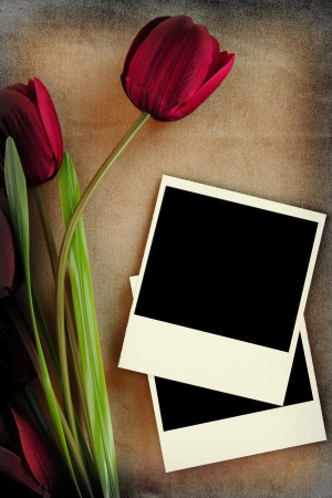 Photo frame and tulips on vintage background photo