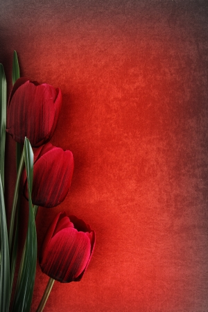Beautiful tulip flowers on vintage background photo