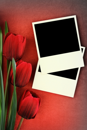 Polaroid frame and tulips on vintage background photo